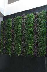 greenwall3.png