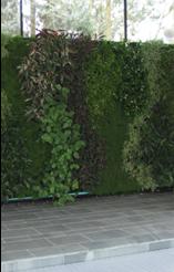 greenwall4.png