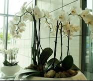 orchid reception.jpg
